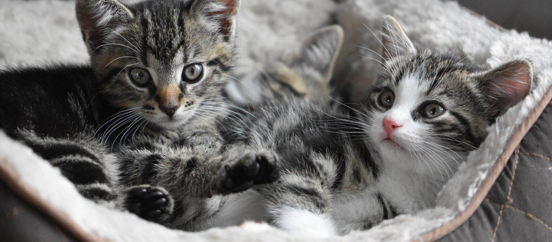 Fino a 40% di Sconto su Prodotti per Animali Domestici